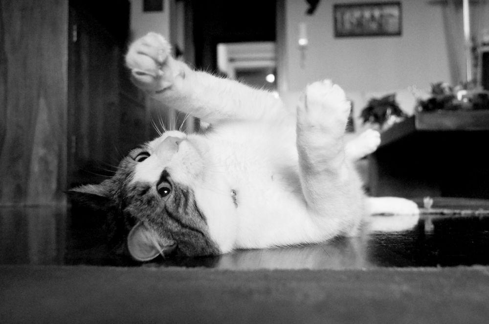 Gioco di un gatto by David H.Rizzi Bucher