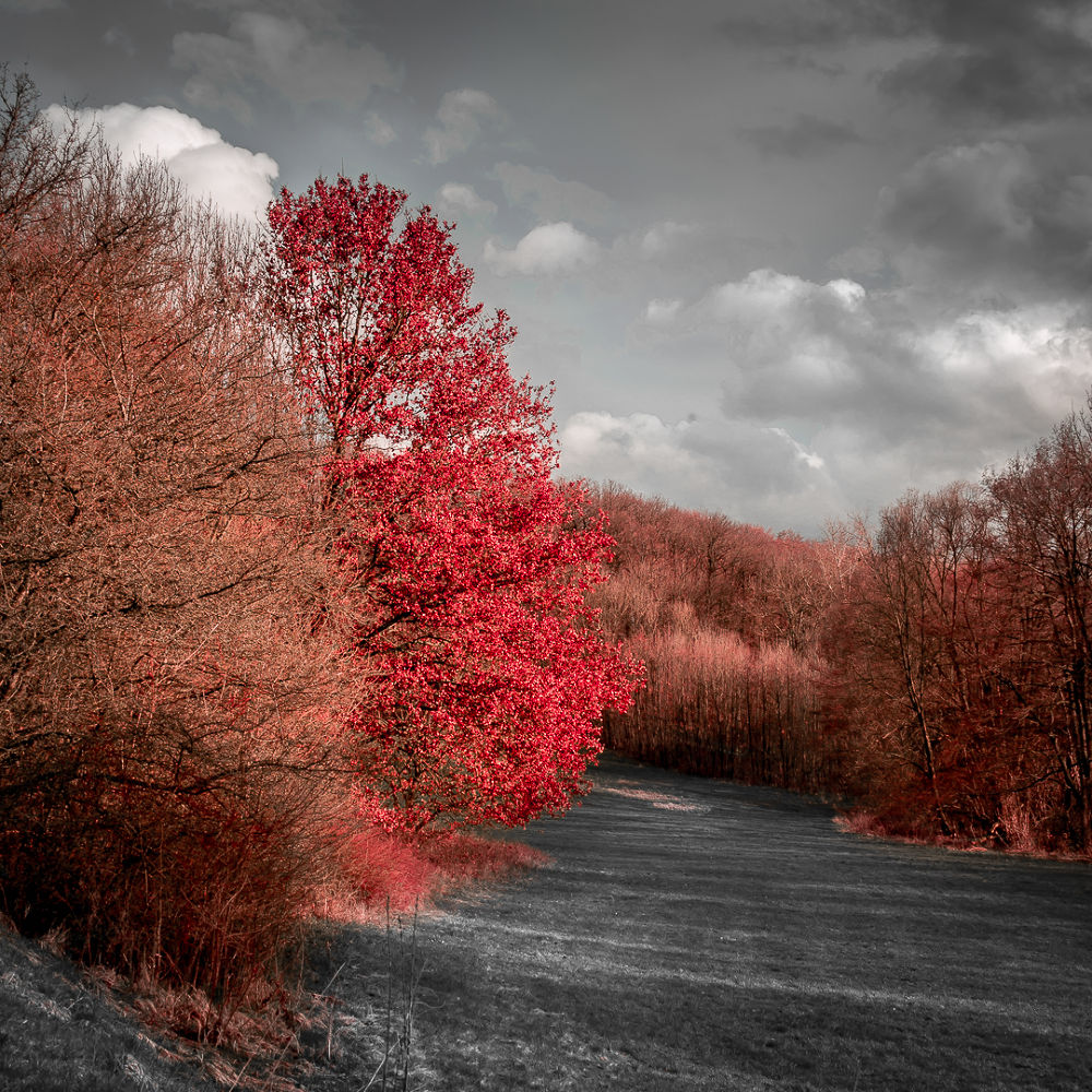 Red by Andreas