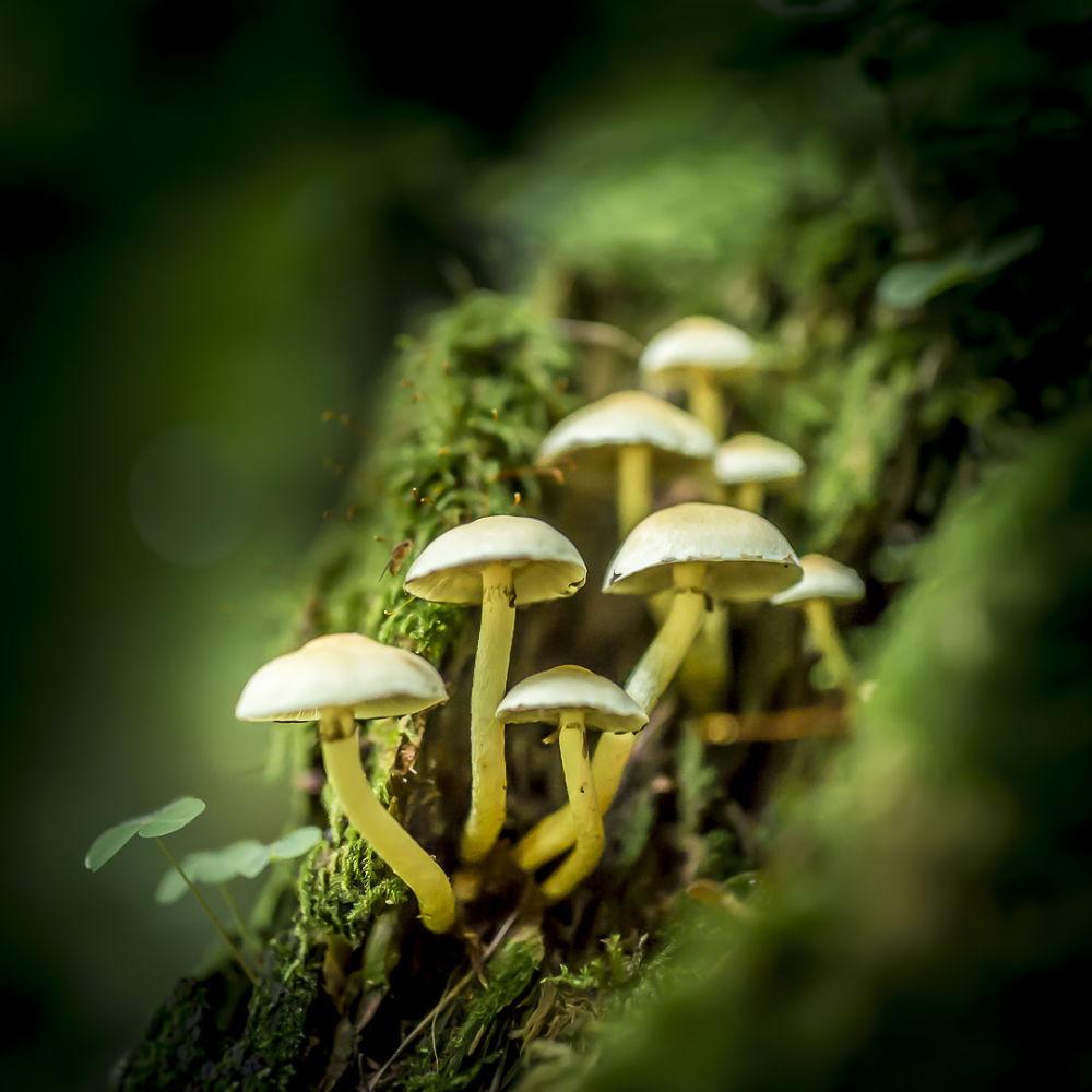 mushrooms by Andreas
