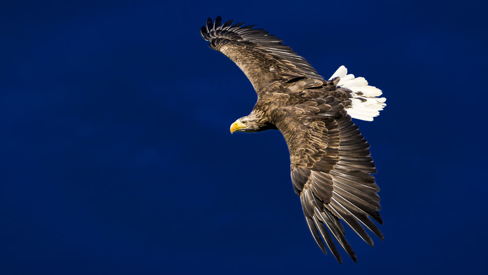 eagle flight 1st by Andreas