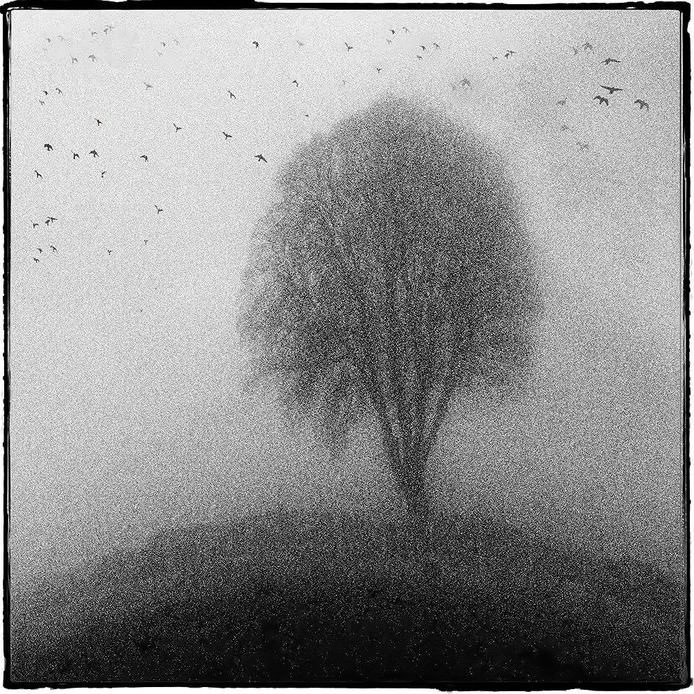 Tree in Mist by Peter Paterson