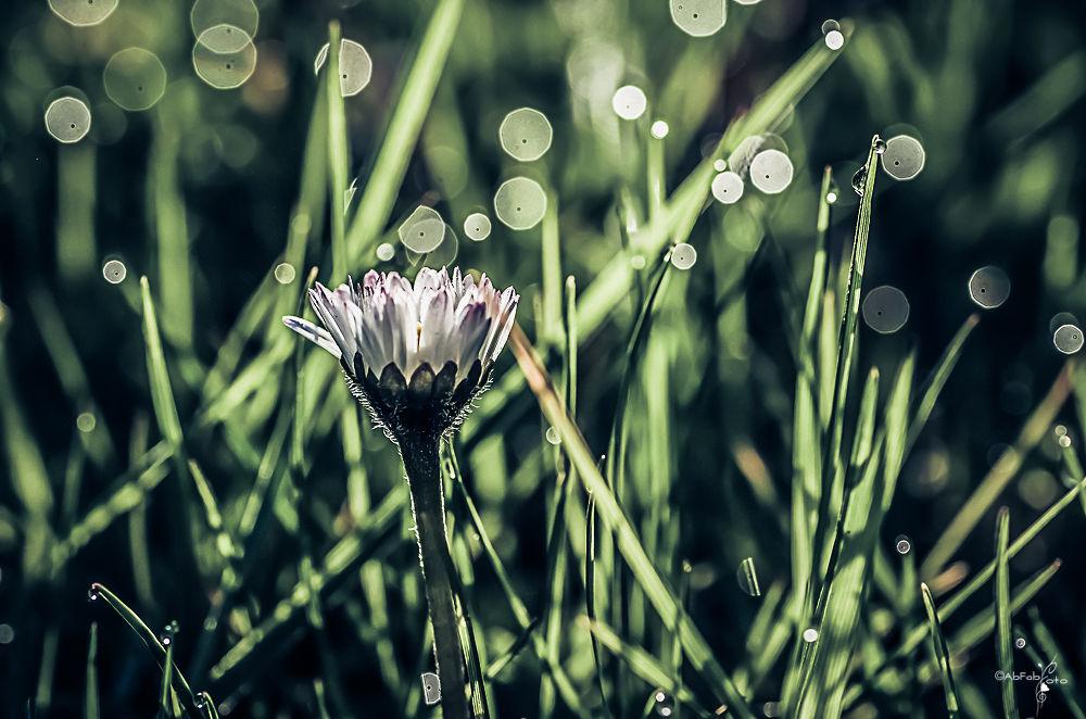 printemps by abfab foto