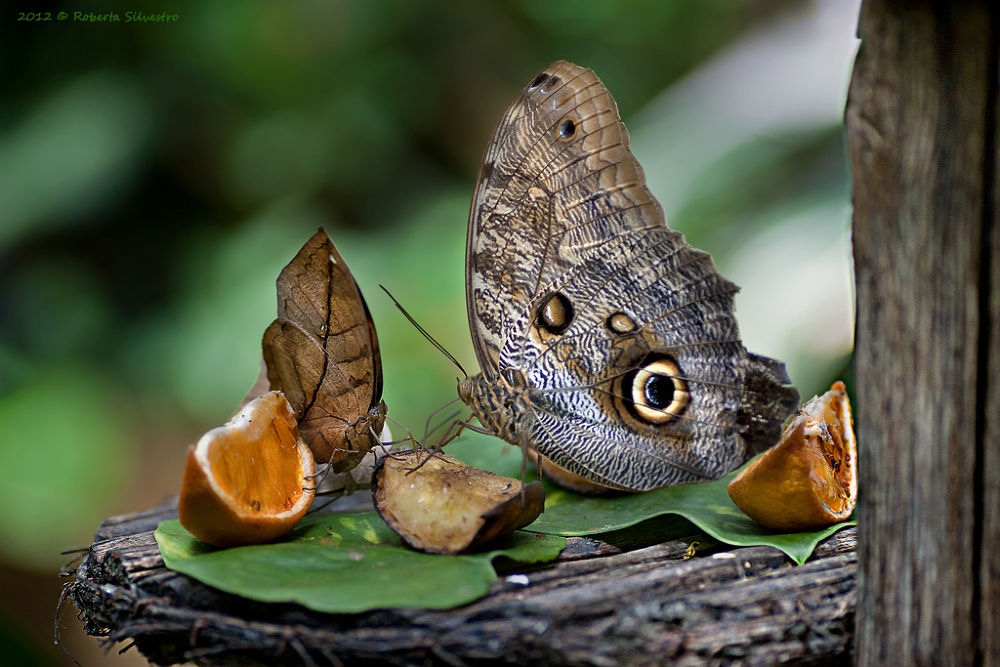 La Natura è meravigliosa by roberta silvestro