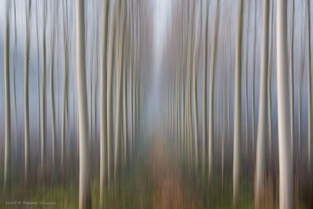 Tra Sogno e realtà - Dream and Reality by roberta silvestro