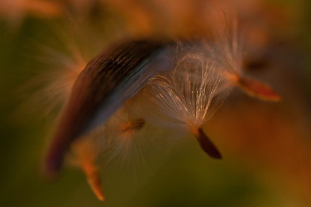 Essenza - i colori del tramonto - by roberta silvestro