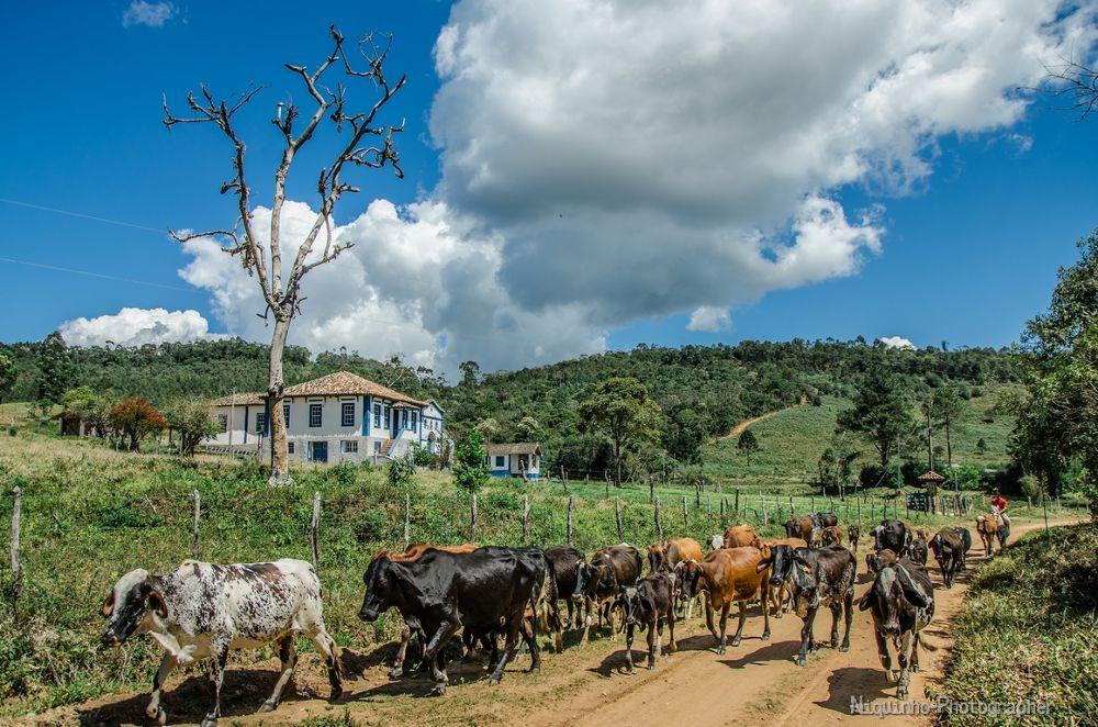 Boiada na Estrada by Leandro C. Souza