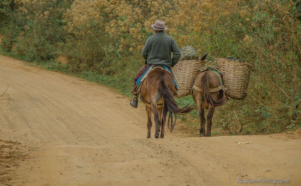 Photo in Rural #vida rural