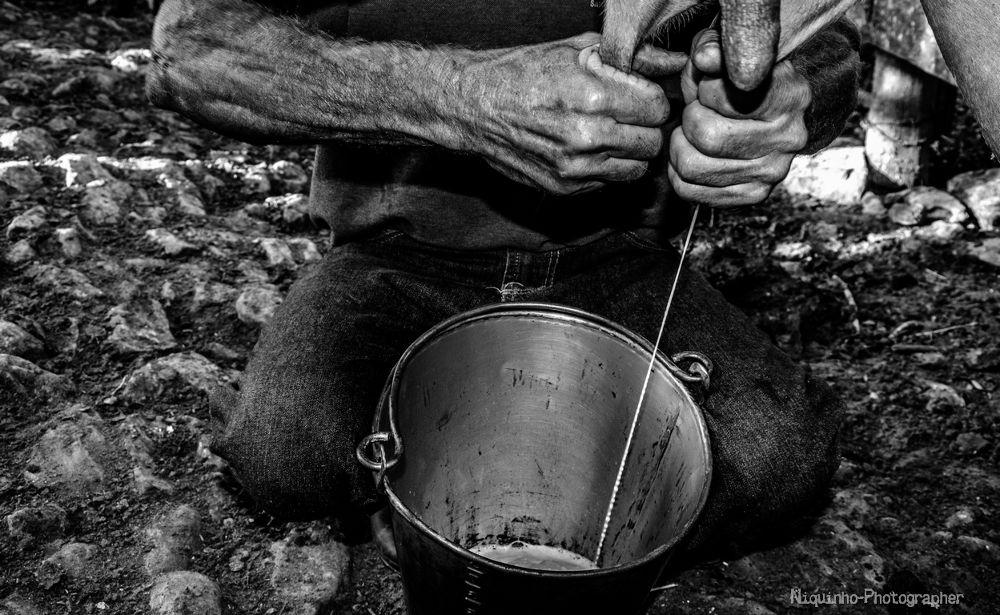 o que nos alimenta by Leandro C. Souza