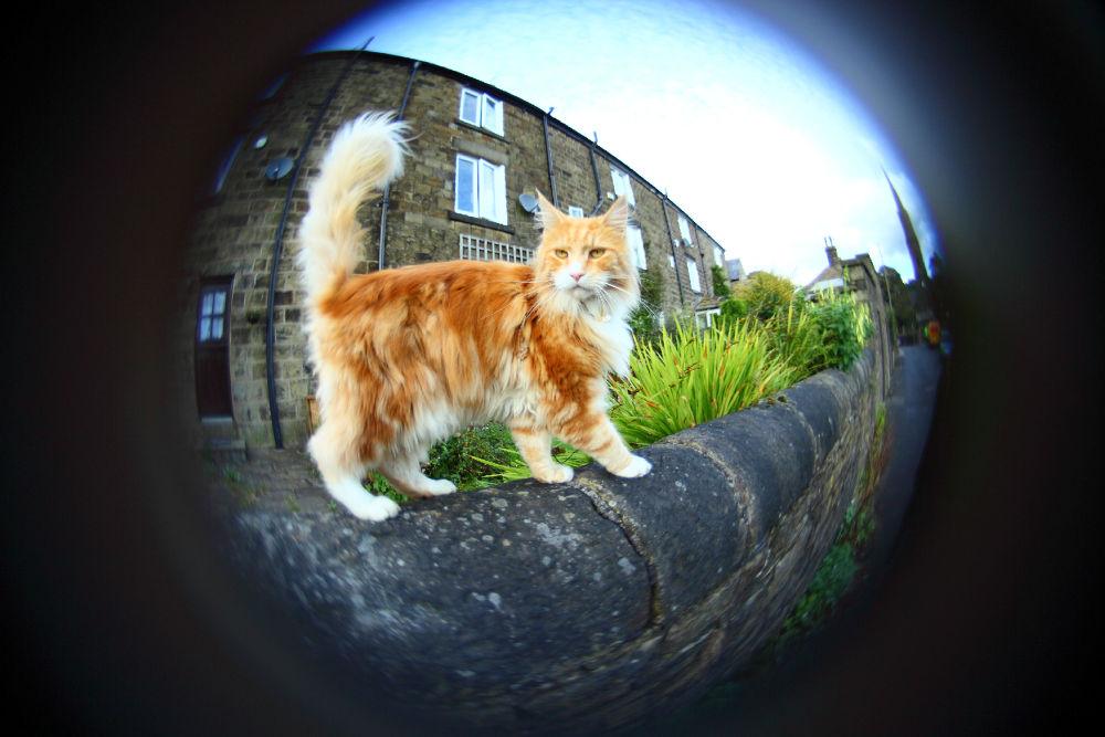 Ginger friend by lilian Lingwood