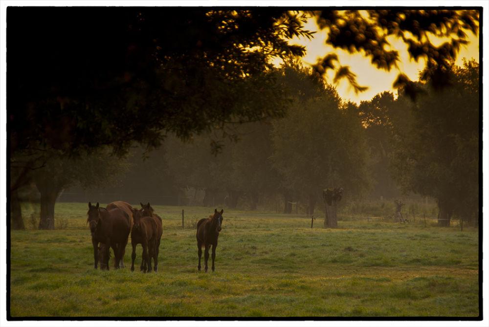 Sunrise by Lambert J. Derenette