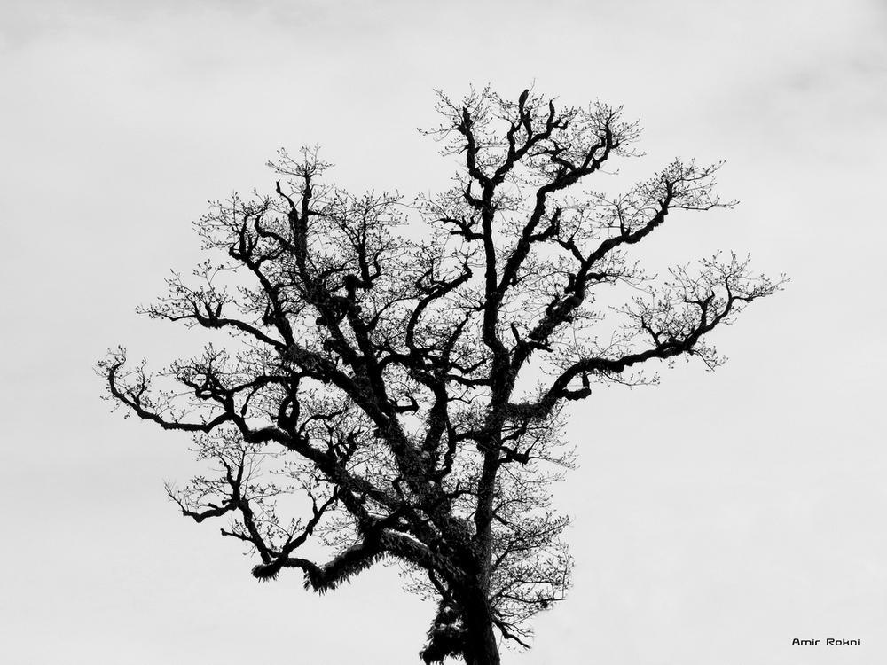 IMG_3092 by amirrokney
