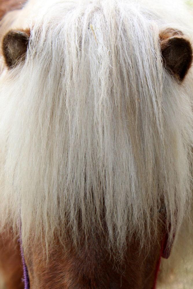 Pony by padillasantiago63