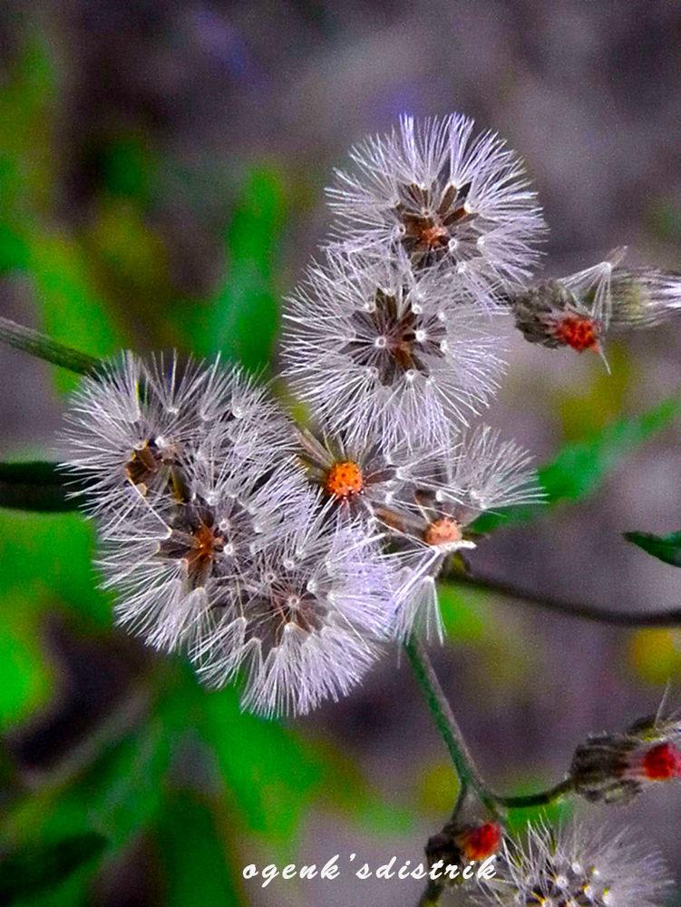 wildflowers by ogenksdistrik