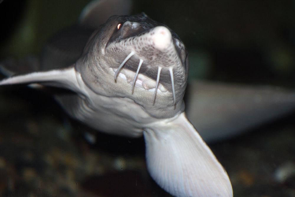 Fish by monanorrman