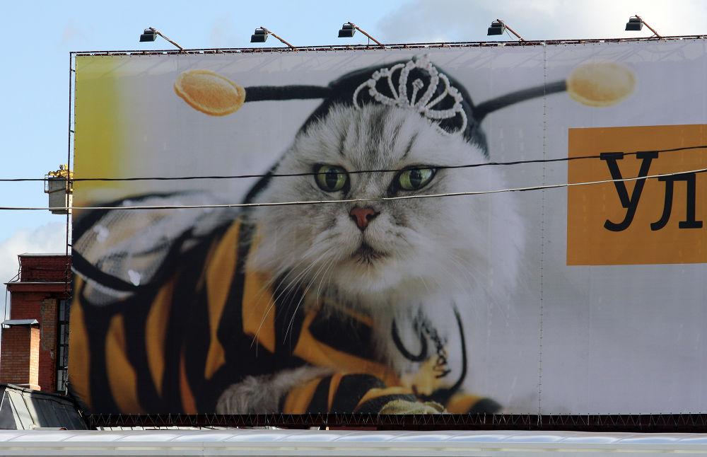 cat by monanorrman