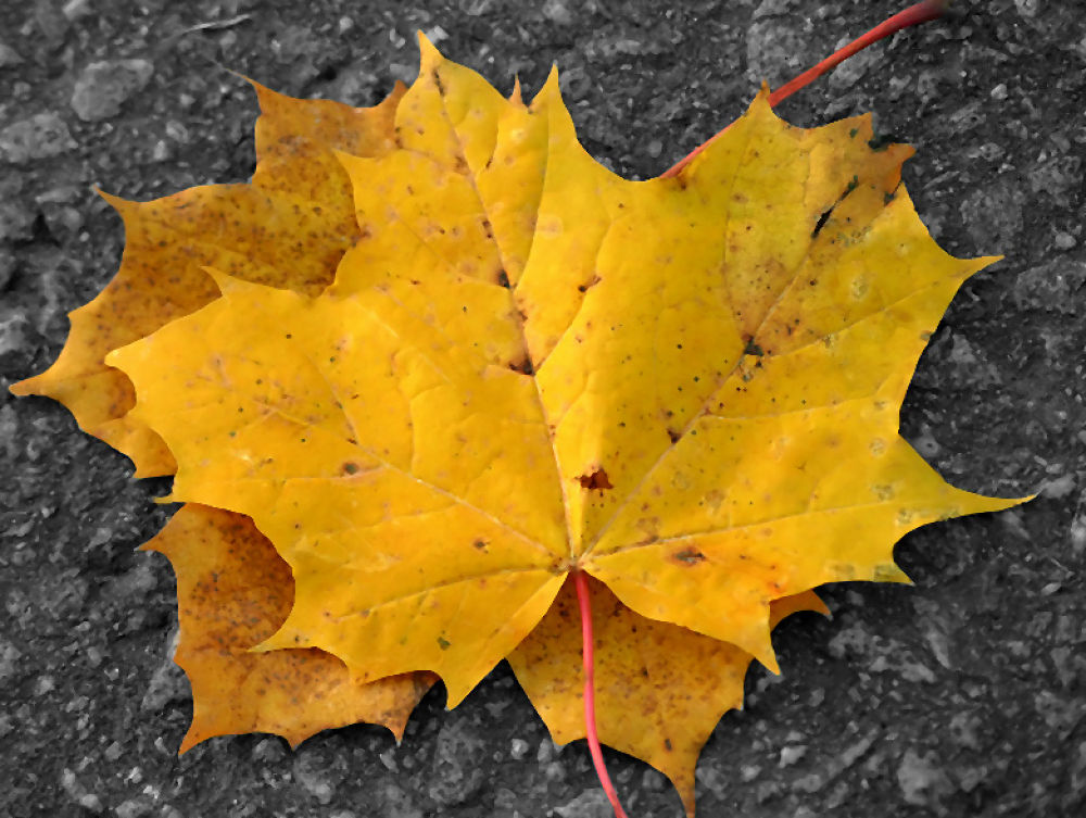 Photo in Macro #leaves #yellow #fall #ypa2013