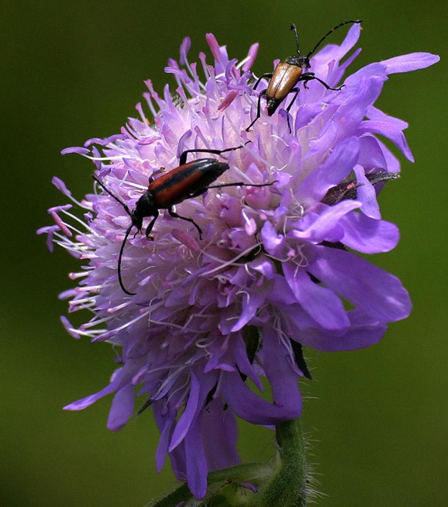 Bugs on flower by monanorrman