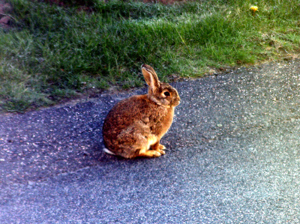Rabbit by monanorrman