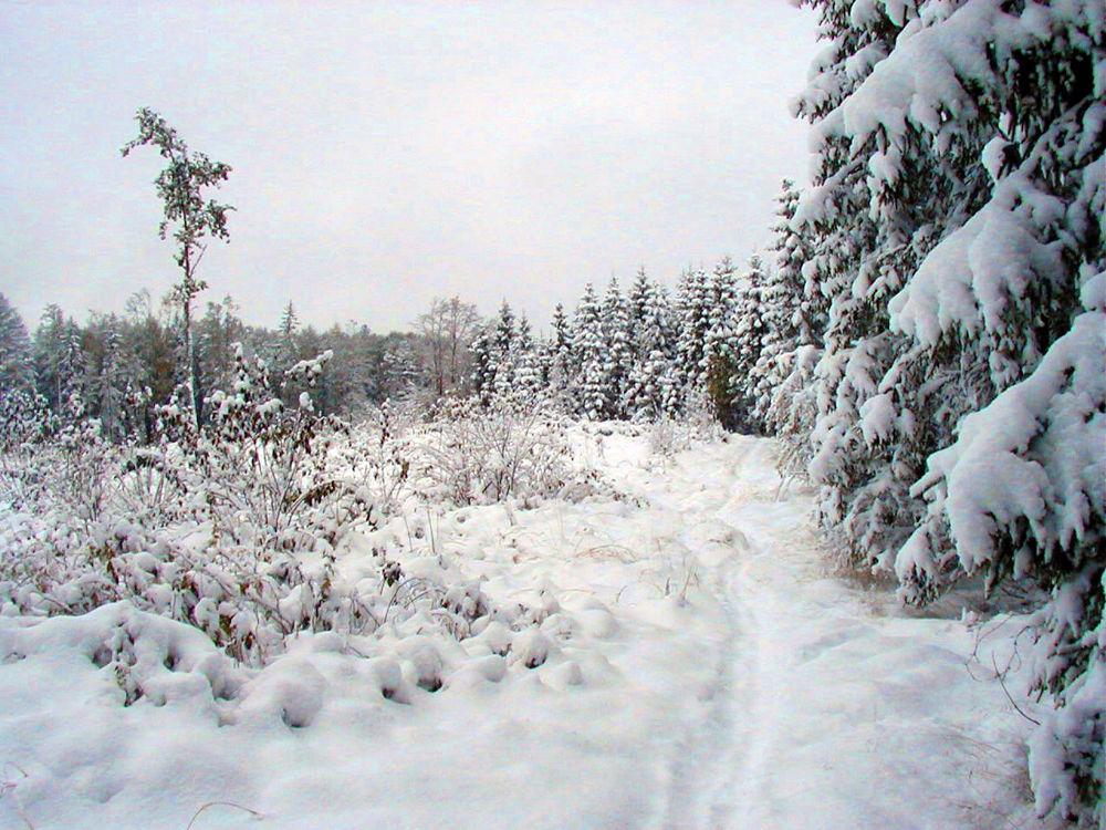 winter by monanorrman