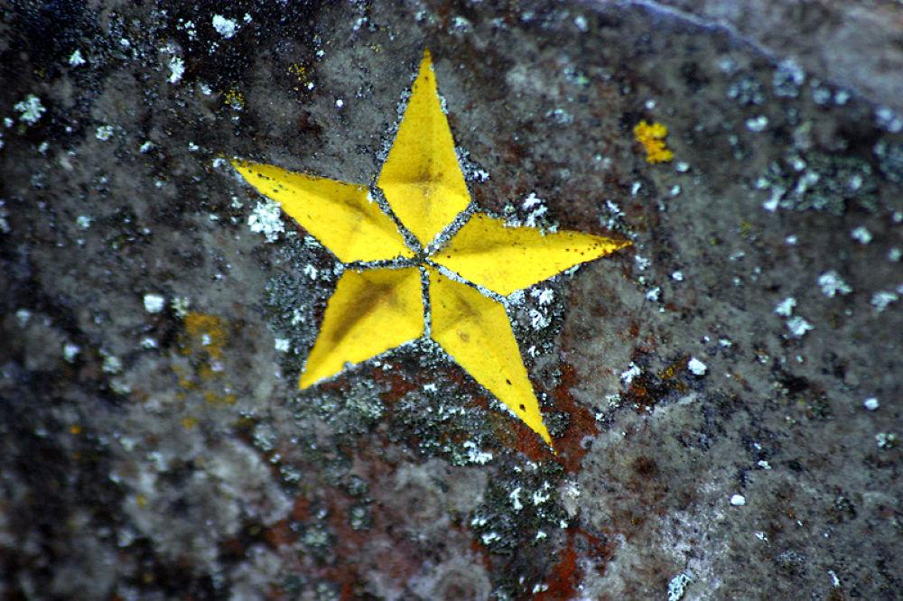 a star by monanorrman