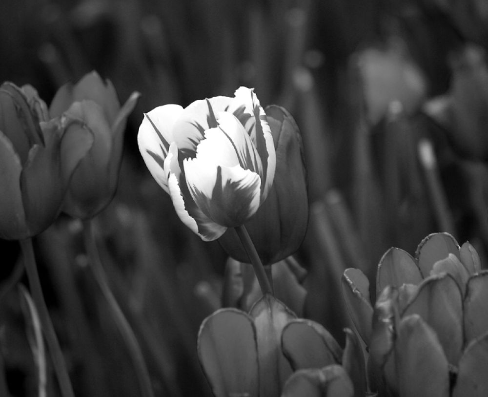 Standing Out bw by monanorrman