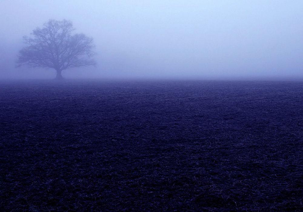 a  foggy morning by monanorrman