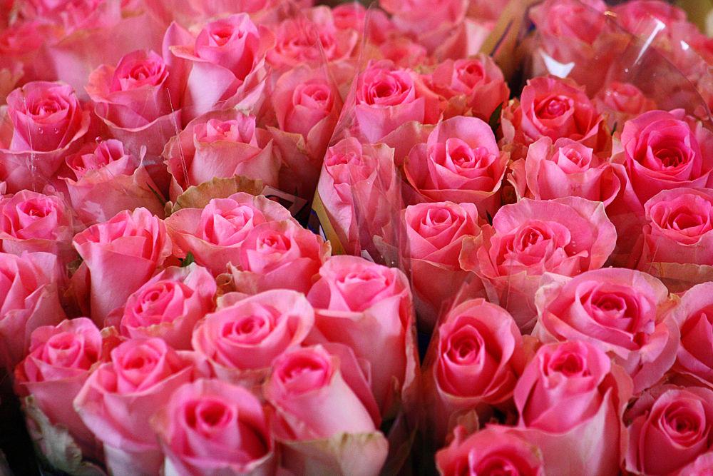 roses by monanorrman