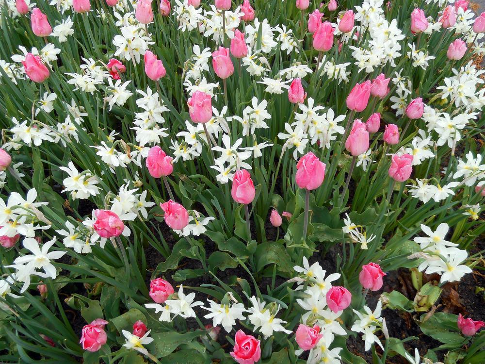 spring flowers by monanorrman