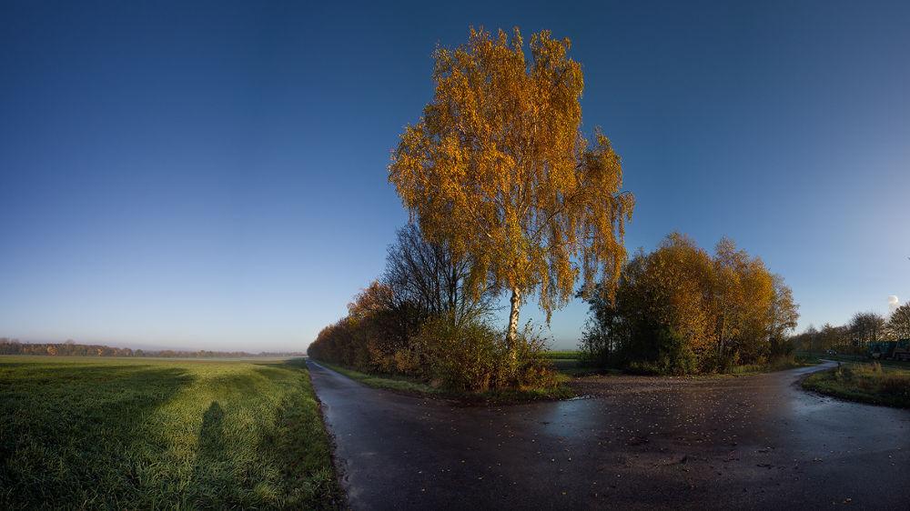 Herbstmorgen by Eva Czorny