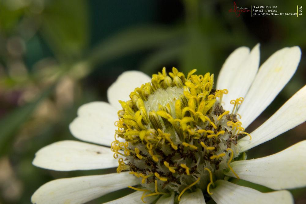 Macro Flower by Eddy WU