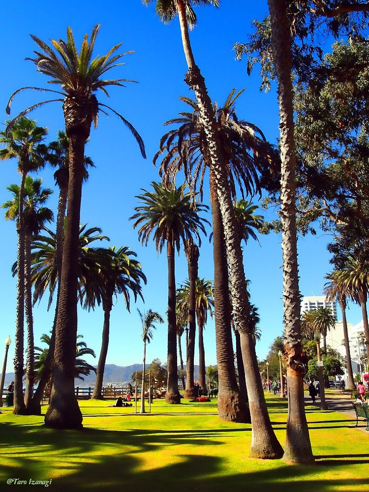 Photo in Random #santa monica #green #westside #beautiful #travel