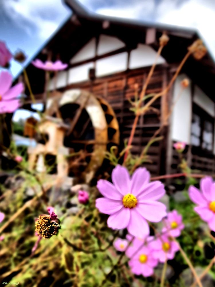 Water mill and Autumn in Japan.  by TaroIzanagi