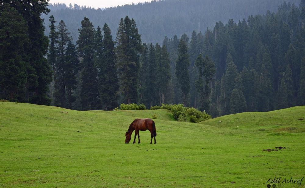 horsa by adilashraf