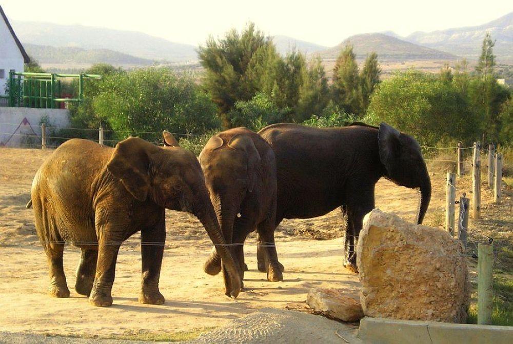Photo in Animal #tunisia #elephants #animals #oc0404 #onur #güner #güray