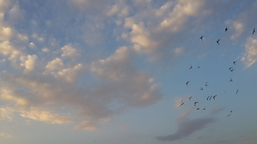 sky and birds by parmis delasa
