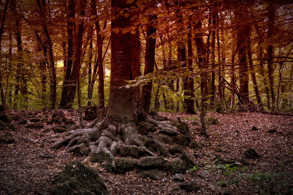 El bosque by Juan Carlos Arranz