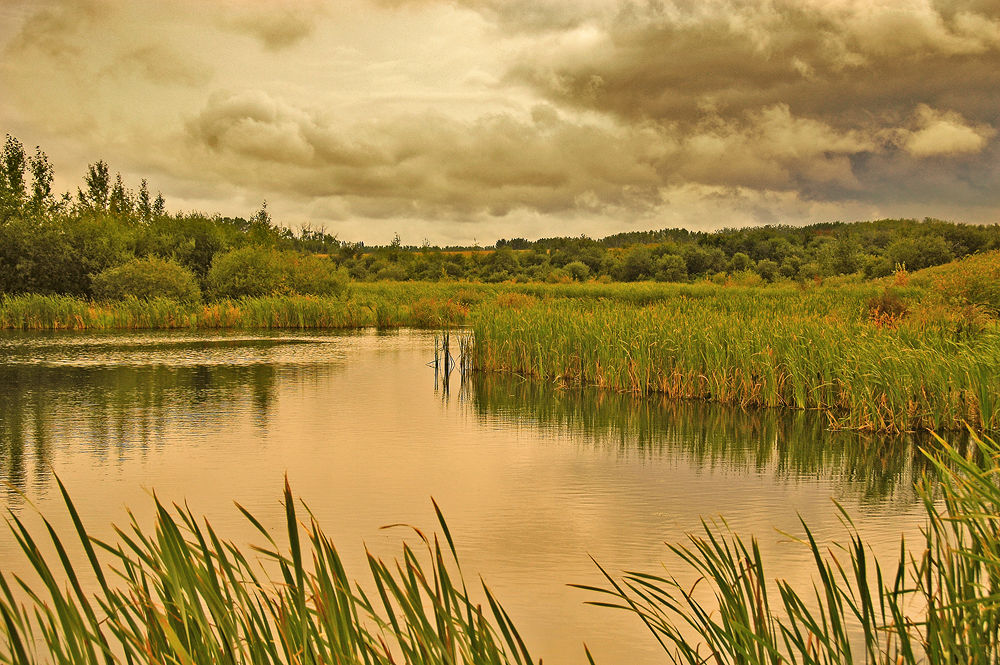 Hoar's Slough by clivescottphoto