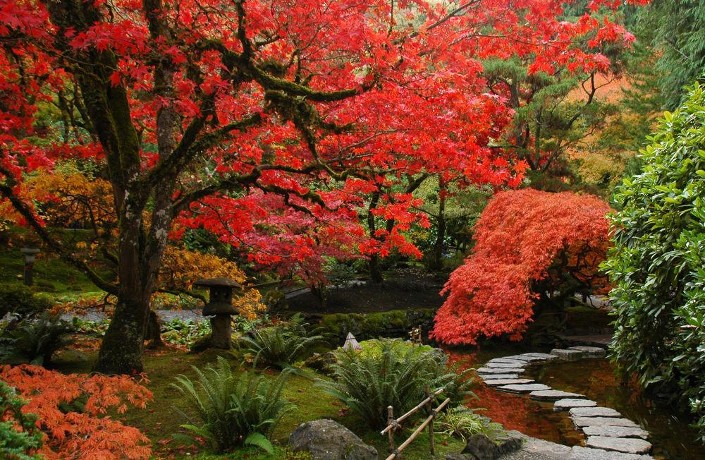Butchart Gardens 1 by clivescottphoto