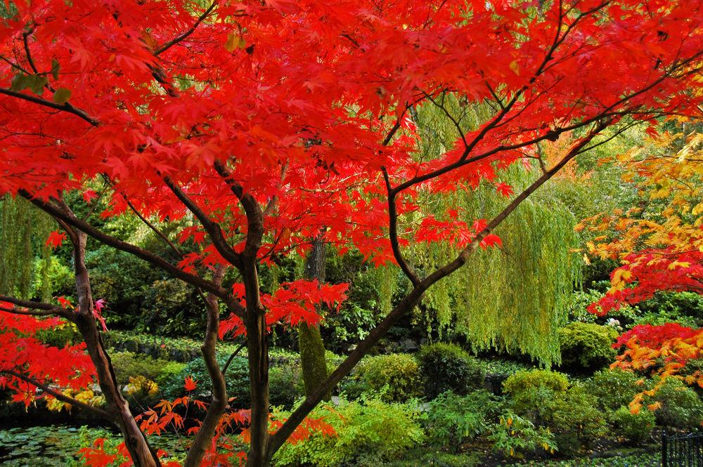 Butchart Gardens 2 by clivescottphoto