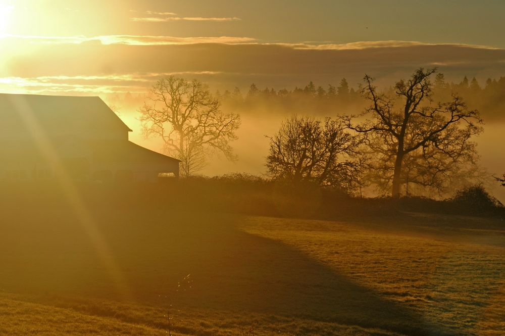 Morning Mist by clivescottphoto