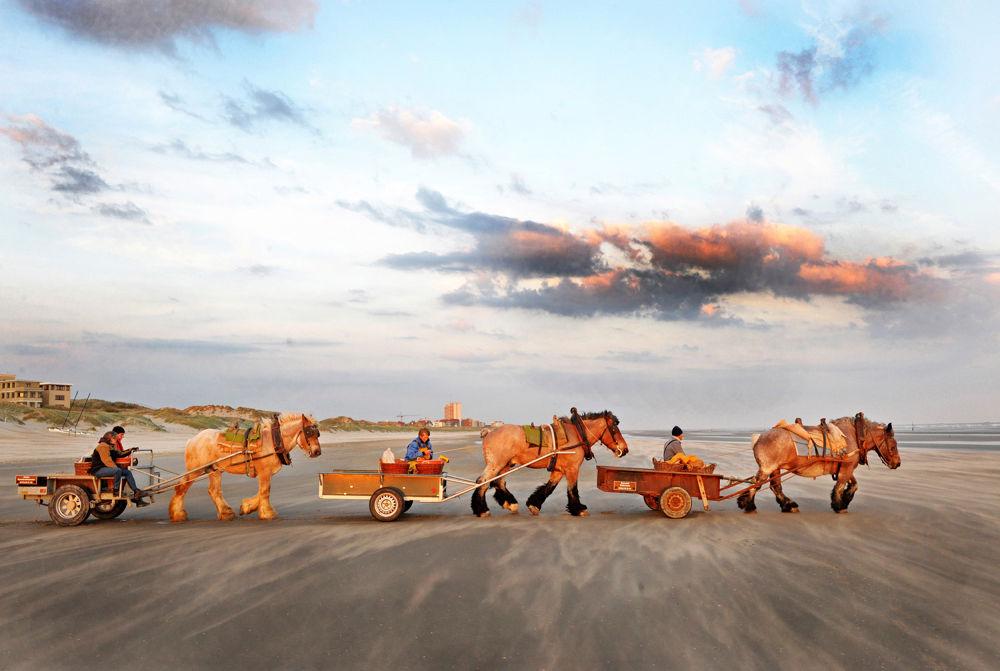 Photo in Animal #horse #wagon #sea #sand #beach