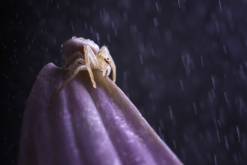 Purple rain by kiff