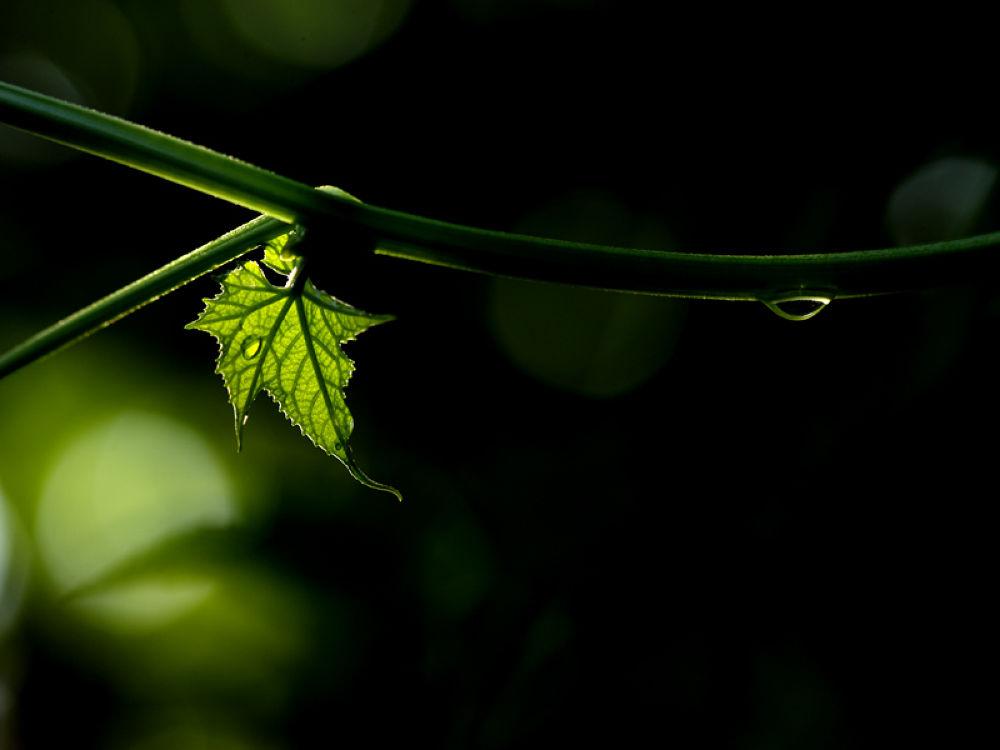 Photo in Nature #morning #leaf #dew #mist #village #green #soft #backlight #back light #rim light #early #dawn #bengal