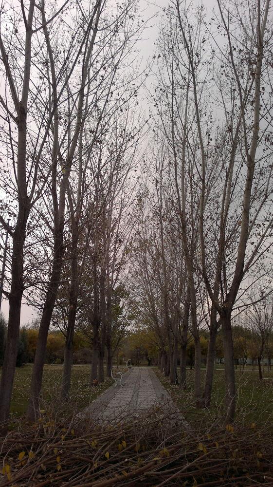 Iran - South_East_Tehran-AZADEGAN_Park-Photographer_AhmadAnvari by Ahmad Anvari