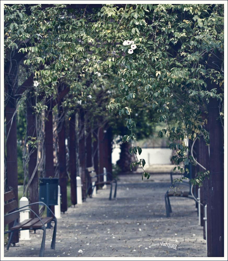 Photo in Nature #random #ypa2013 #canon #photography #nature #urban
