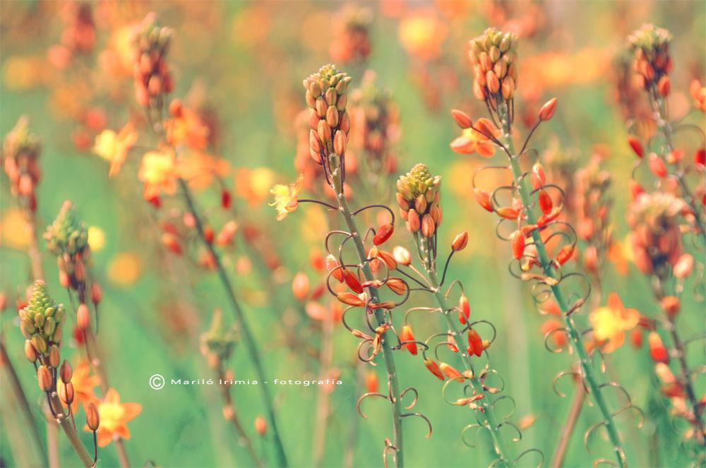 Photo in Fine Art #flowe. flowers #flor #flores #nature #naturaleza #fine art #digital art #marilo irimia photography
