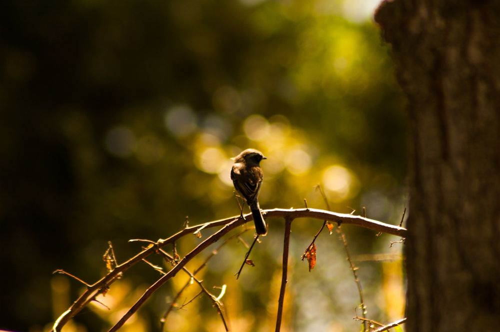 Photo in Random #birds #silhouette #rim #bokeh #ypa2013