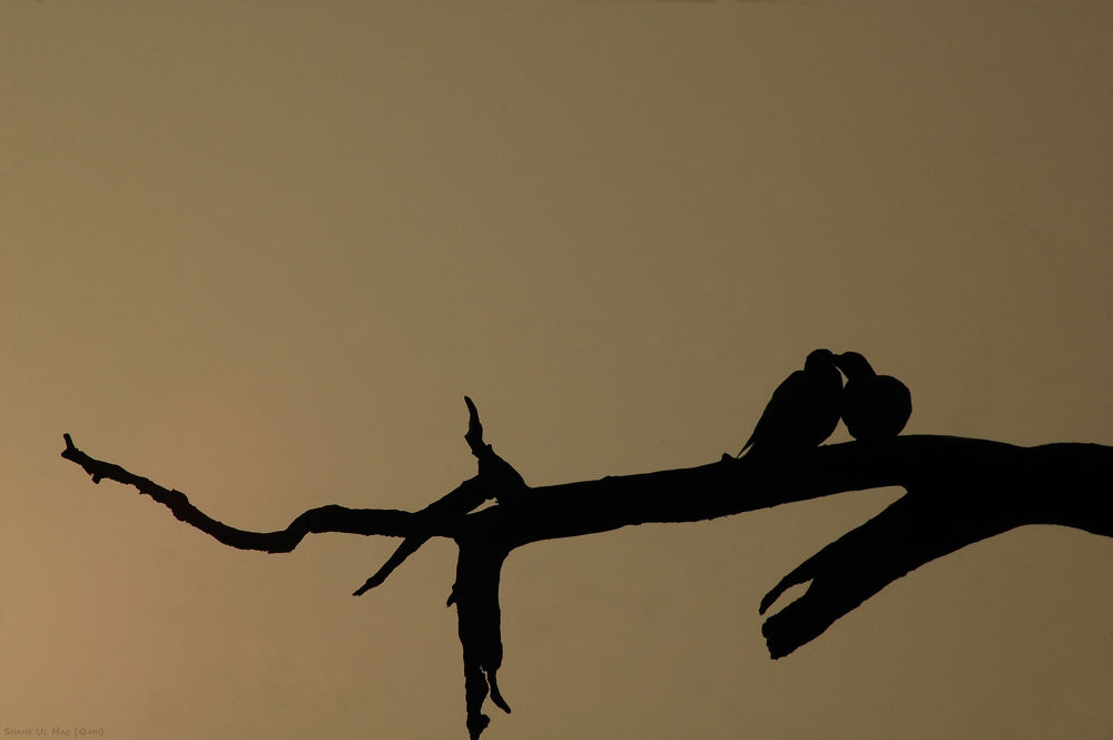 'And Love and Patience' by Shams Ul Haq Qari