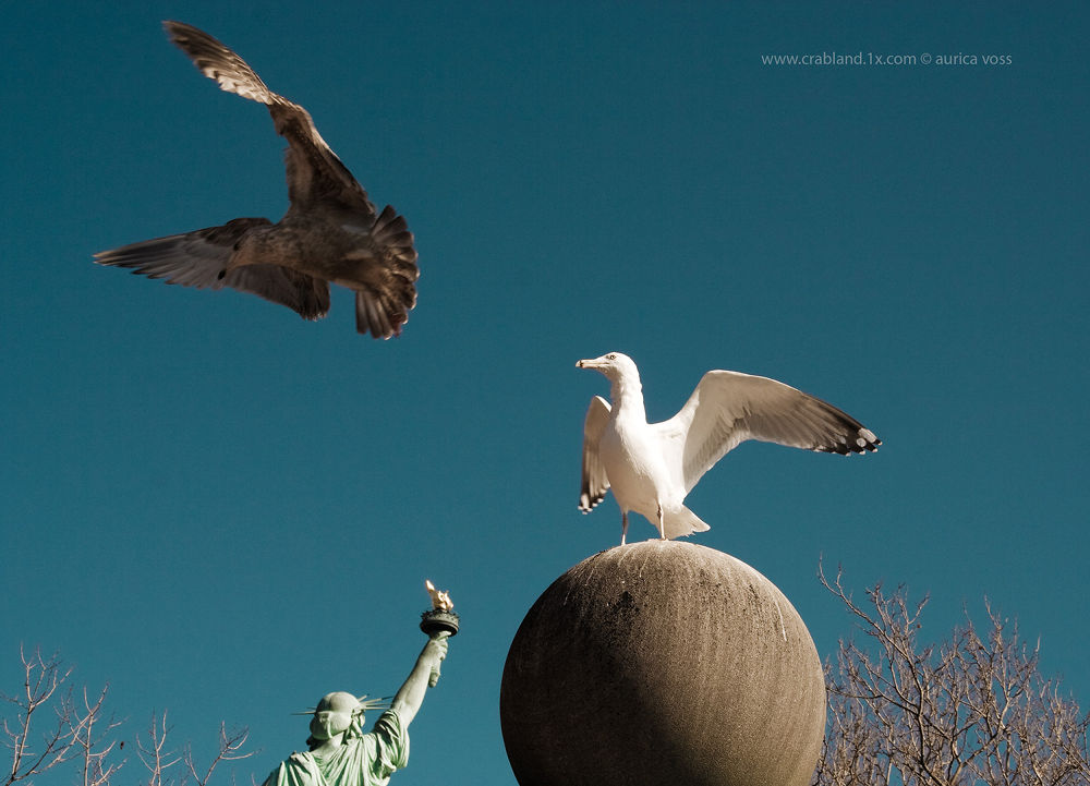 Liberty Island by auri