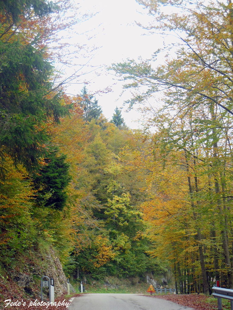 Paesaggio autunnale by fede